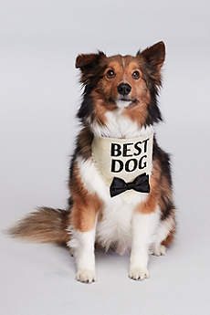 Best Dog Bow Tie Bandana