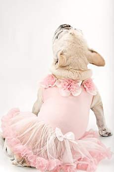 Sweet Floral Trimmed Pink Dog Dress