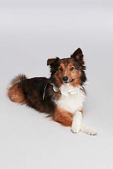 Floral Ribbon Dog Collar