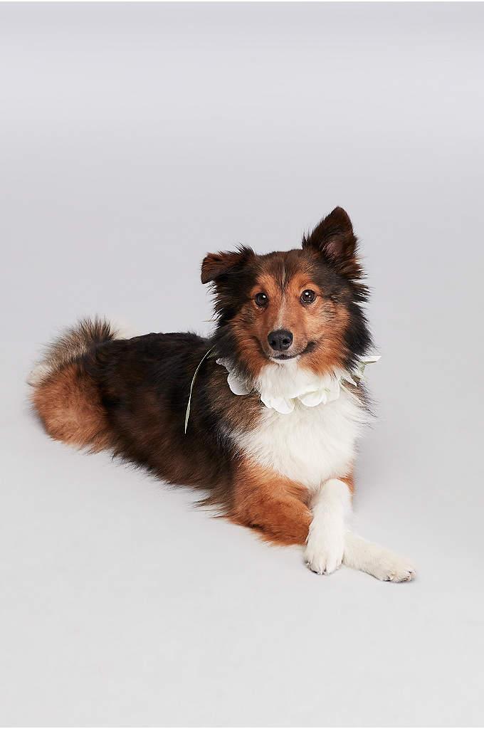 Floral Ribbon Dog Collar - Soft satin ribbon and pretty petals make your