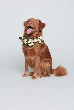 Luxe Floral and Greenery Dog Collar
