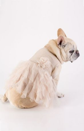 Gold Glitter Ruffled Tulle Skirt Dog Dress
