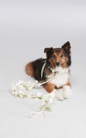 Floral Ribbon Dog Leash