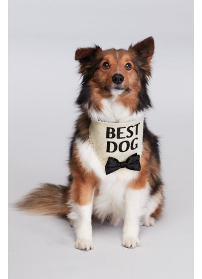 Best Dog Bow Tie Bandana - Wedding Gifts & Decorations