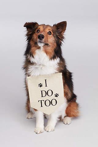 Letrero Para Perro