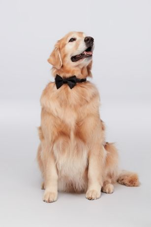 Dog of Honor Bow Tie | David's Bridal | Tuggl