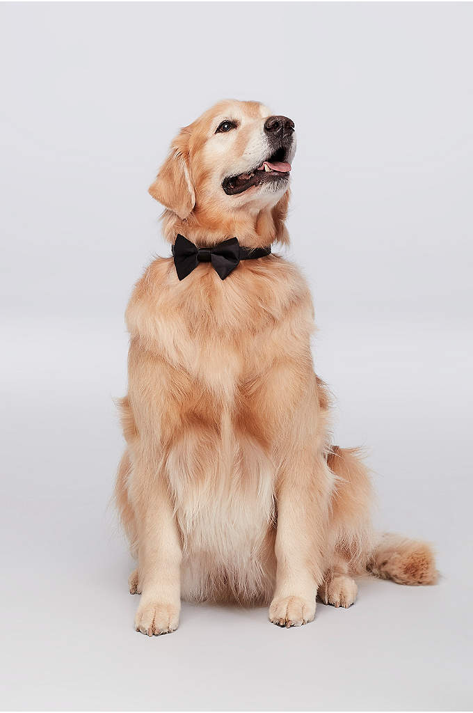 Dog of Honor Bow Tie - Black tie optional? Not for your best furry