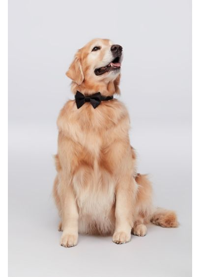 Black (Dog of Honor Bow Tie)