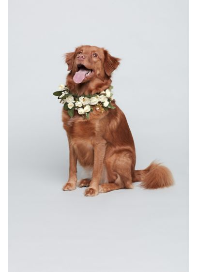 Luxe Floral and Greenery Dog Collar - A lush ring of roses and greens creates